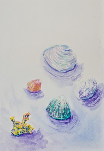 seashells_and_coral